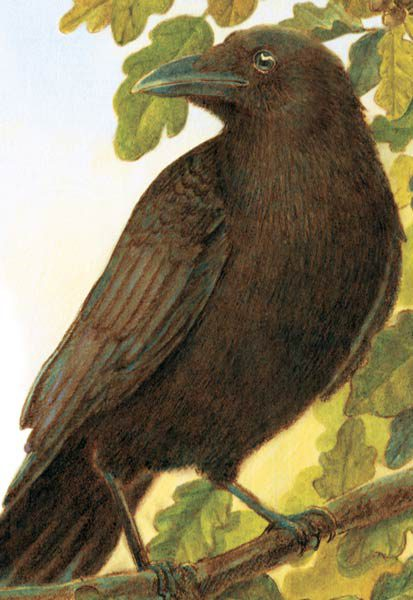 Cover of Crow Not Crow by Jane Yolen and Adam Stemple