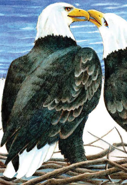 Cover of On Eagle Cove by Jane Yolen, Illustrated by Elizabeth Dulembs